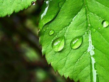 Водный обмен у растений