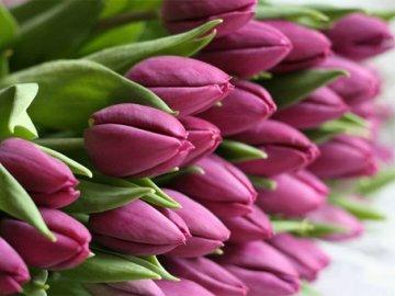 Несколько советов по выращиванию тюльпанов