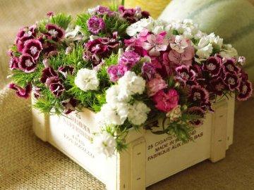 Секреты выращивания гвоздики в комнате