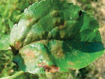Заболевание растений