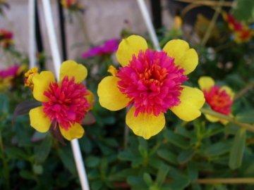 Полезные качества растения