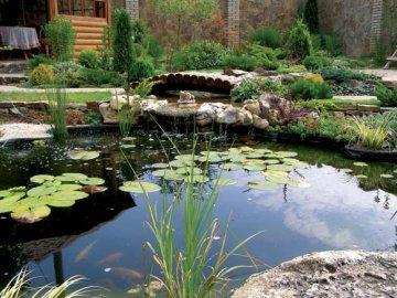 Растительный и животный мир пруда