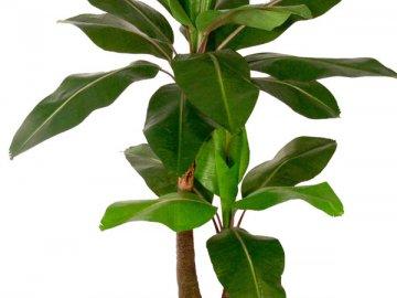 Трудности при выращивании растения