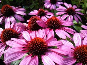 Лекарственные многолетние растения