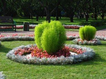 Обрезка и вредители растения