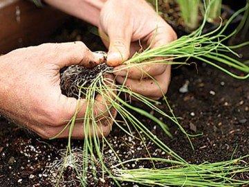 Агротехнические способы борьбы и профилактика
