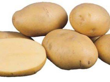 """Сорт картофеля """"Агрия"""""""