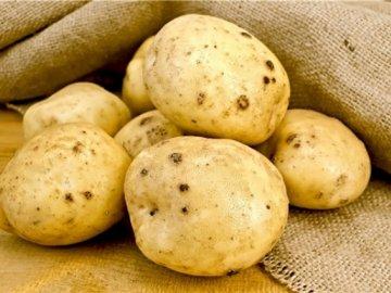 Вредители картофеля - золотистая нематода