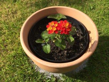Методы размножения цветка, посадка