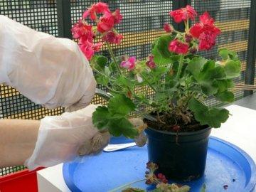 Советы по уходу за декоративным растением