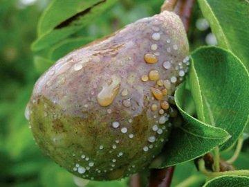 Борьба с болезнями и вредителями плодового сада