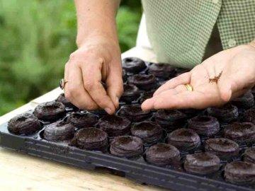 Подготовка почвы и посадка семян