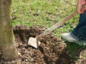 Принципы ухода за деревом