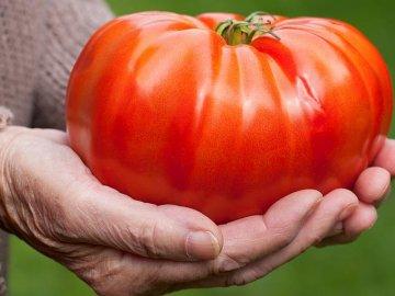 Сорта, дающие крупные плоды