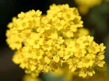 Вредители и болезни цветка, борьба с ними