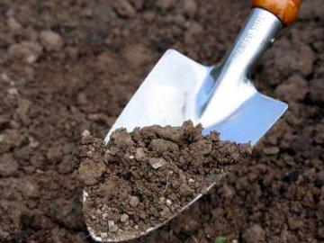 Высокая кислотность почвы: как ее понизить