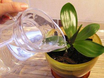 Что делать, как вылечить растение?
