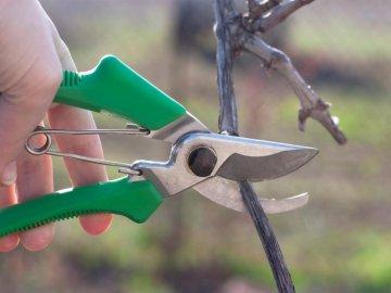 Схема обрезки винограда на третьем, четвертом и пятом году жизни куста
