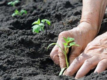 Пересадка и уход за рассадой