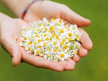 Сбор, сушка и хранение растительного сырья