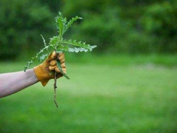 Применение гербицидов для повышения урожайности культуры