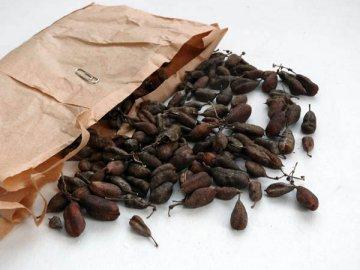 Высевание семян