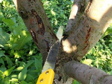 Общая информация об обрезке деревьев