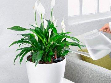 Как ухаживать за растением?