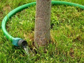 Рекомендации по уходу за корневой системой дерева