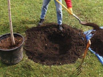 Подготовка почвы, участка и саженца