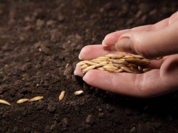 Сроки и правила посадки семян
