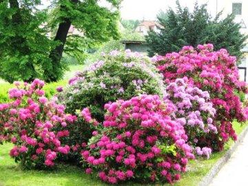 Как выбрать цветущий кустарник для сада