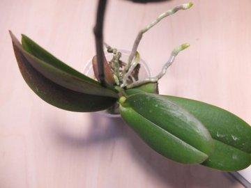 Размножение и пересадка