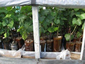 Проращивание в пластиковой бутылке