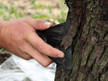 Подготовка деревьев к побелке