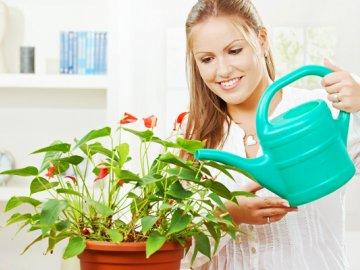 Орошение и удобрение