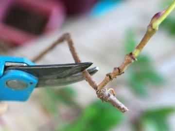 Как размножают растение