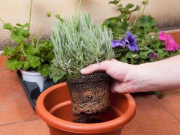 Зачем нужно пересаживать горшечные растения