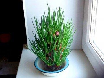 Преимущества и недостатки метода выращивания