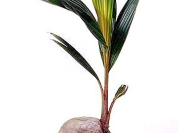 Болезни и вредители растения, как их преодолеть