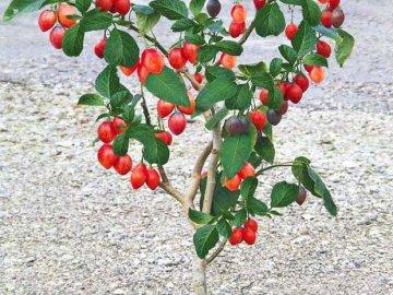 Как выращивать дерево в открытом грунте?