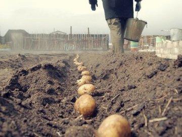 Сроки и правила посадки овоща
