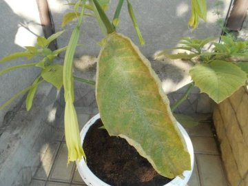 О болезнях и вредителях растения, борьбе с ними