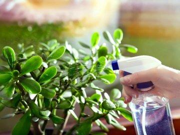 Уход за растением после пересадки
