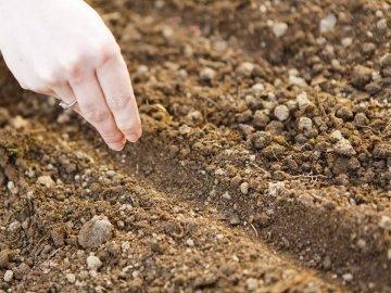 Сроки и правила посадки травянистого растения