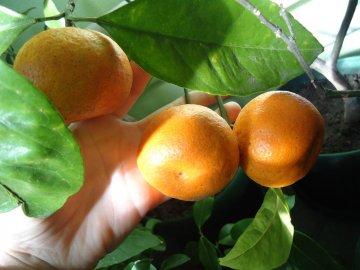 Условия выращивания: освещение, влажность, температура
