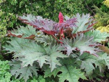 Особенности строения растения