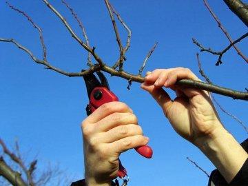 Обрезка и подготовка к зиме
