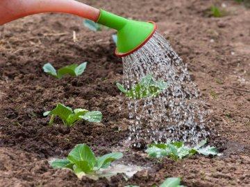 Рекомендации по уходу за белокочанной капустой