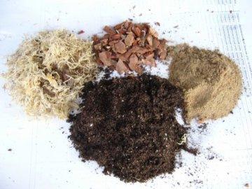 Выбор почвы и емкости для цветка